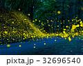 ヒメボタル ゲンジボタル 光跡の写真 32696540