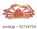 カニ 蟹 ズワイガニの写真 32716724