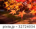 もみじ 椛 紅葉の写真 32724034