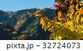 紅葉 林 秋の写真 32724073