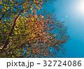 紅葉 秋 青空の写真 32724086