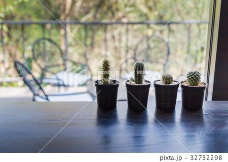 set of cactus on the wooden counterの写真素材 [32732298] - PIXTA