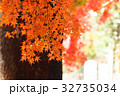 モミジ 紅葉 秋の写真 32735034