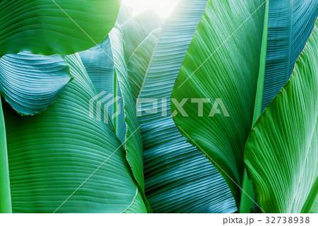 熱帯植物 32738938