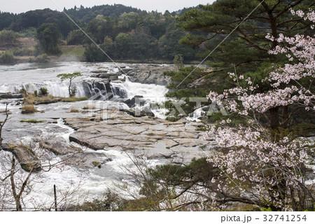 桜の花と曽木の滝 32741254