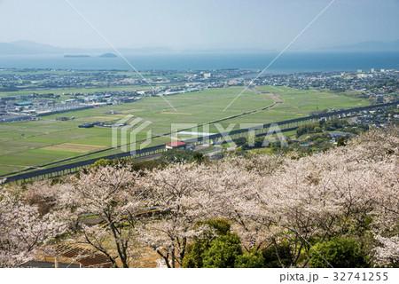 桜並木と出水市の海沿いの風景 32741255