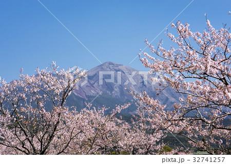 桜の花を手前に高千穂峰 32741257