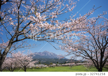 桜の花を手前に高千穂峰 32741258