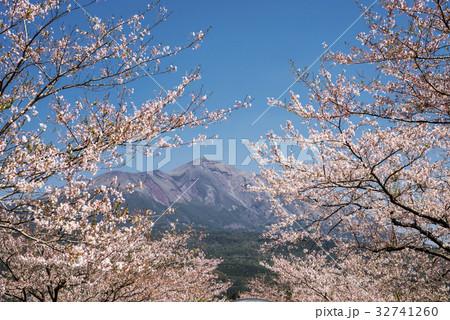 桜の花を手前に高千穂峰 32741260