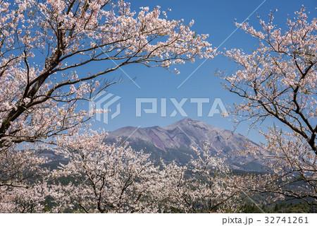 桜の花を手前に高千穂峰 32741261