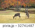 紅葉 鹿 親子の写真 32741487