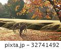 ナンキンハゼ 紅葉 鹿の写真 32741492