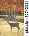 ナンキンハゼ 紅葉 鹿の写真 32742334
