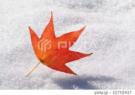 モミジバフウ落葉と晩秋の雪 32750437