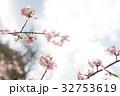 桜 春 花の写真 32753619