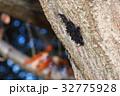 カメムシ サシガメ 幼虫の写真 32775928