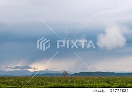 雨が止んだ夏の湿原13 32777825