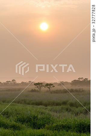 釧路湿原の夏の朝2 32777828