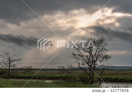 雨が止んだ夏の湿原5 32777856