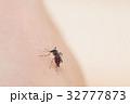 吸血蚊_ヒトスジシマカ 32777873