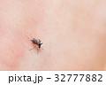 吸血蚊_ヒトスジシマカ 32777882
