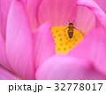 ミツバチとハスの花 32778017