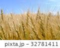 麦の穂 32781411