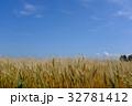 麦の穂 32781412