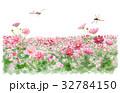 コスモス畑を飛ぶ赤トンボ 32784150
