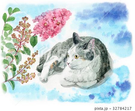 猫と百日紅の花 32784217