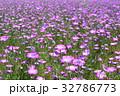花 花畑 麦なでしこの写真 32786773