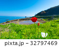 Tulip Flowers and Shiroyone Senmaida,in Noto,Japan 32797469