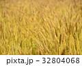 麦 麦畑 畑の写真 32804068
