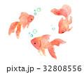 金魚 水彩 水彩画のイラスト 32808556