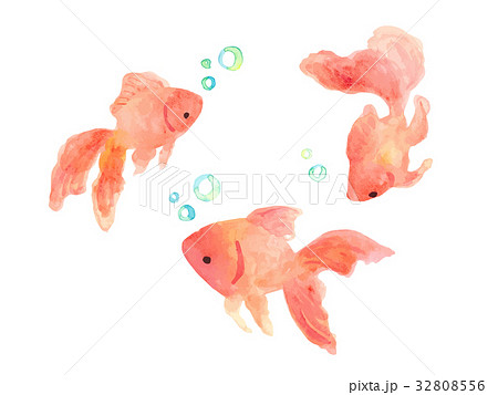 金魚のイラスト素材 32808556 Pixta