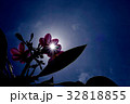 プルメリアの光 32818855