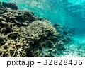 海中 海 珊瑚礁の写真 32828436
