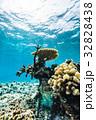 海中 海 珊瑚礁の写真 32828438