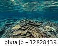 海中 海 珊瑚礁の写真 32828439