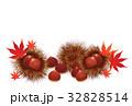 栗 秋の味覚 実のイラスト 32828514