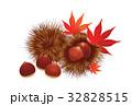 栗 秋の味覚 実のイラスト 32828515