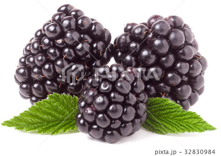 three blackberry with leaf isolated on a white 32830984
