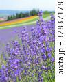 富良野 ラベンダー 花の写真 32837178