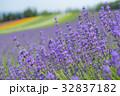 富良野 ラベンダー 花の写真 32837182