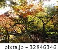秋の陽射しを受ける紅葉と木橋 32846346