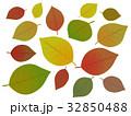 枯れ葉 葉 葉っぱのイラスト 32850488