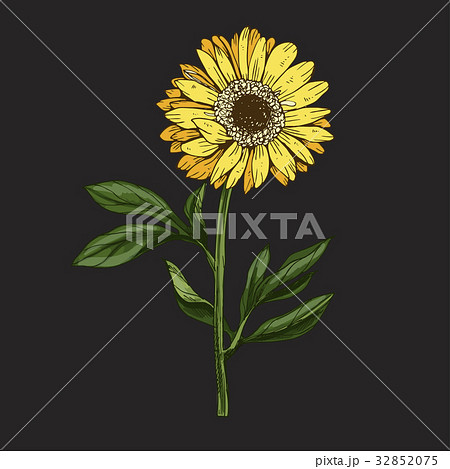 Hand drawn yellow daisy flower with stem  32852075