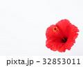 ハイビスカス 32853011