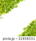 緑 32856531