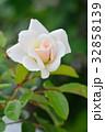バラ 花 薔薇の写真 32858139